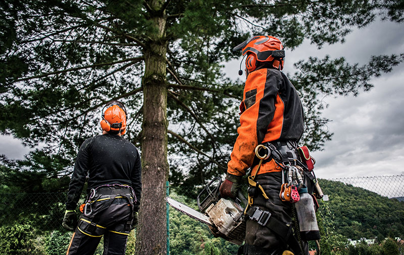 quality tree service in arlington tx