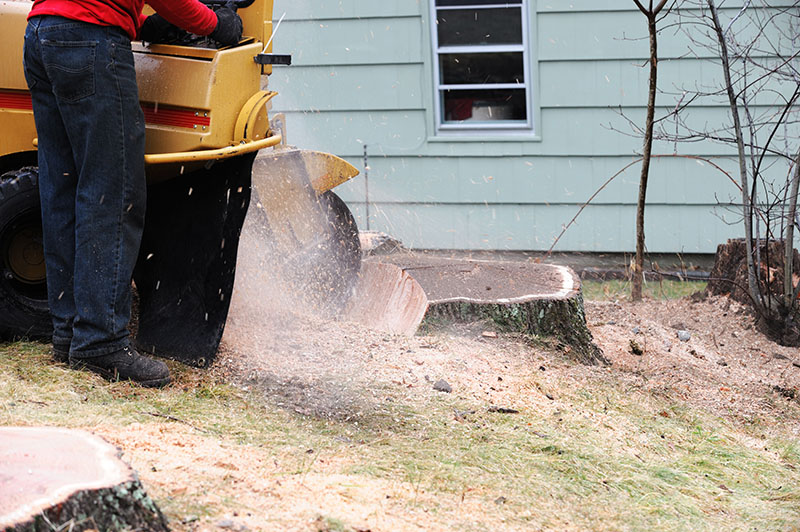natural tree stump removal in arlington tx